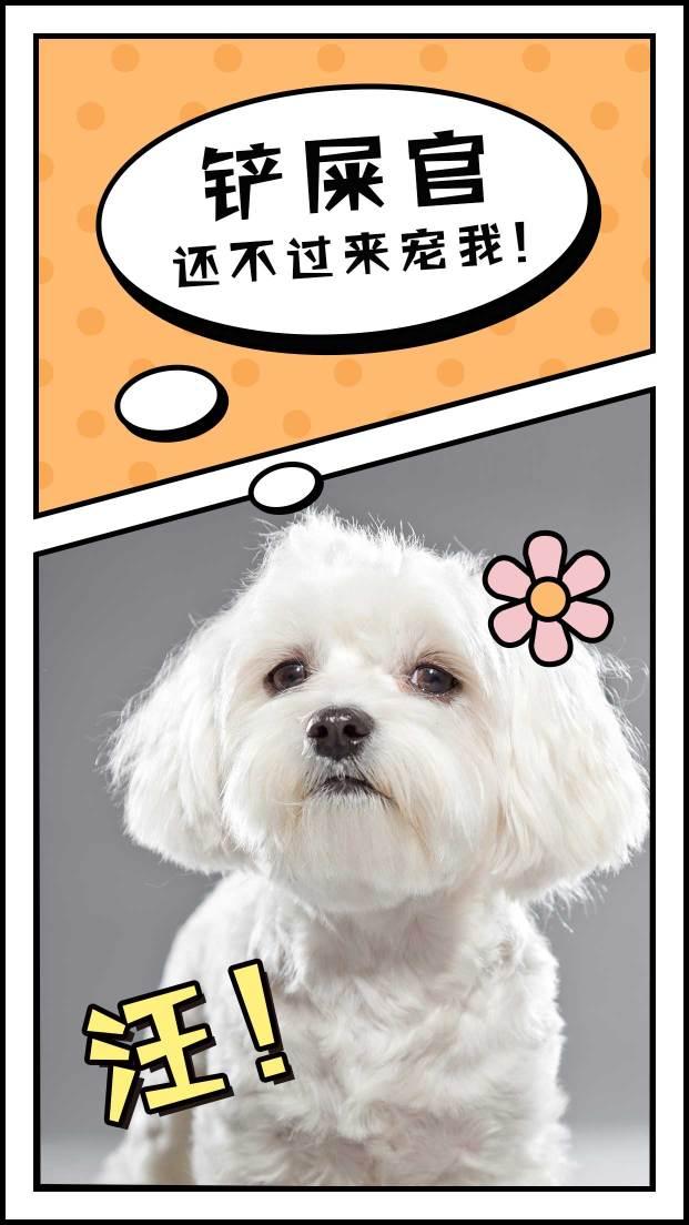 晒宠物模板海报设计