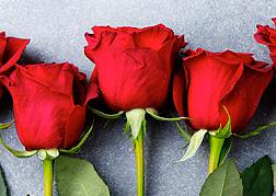 玫瑰花浪漫背景