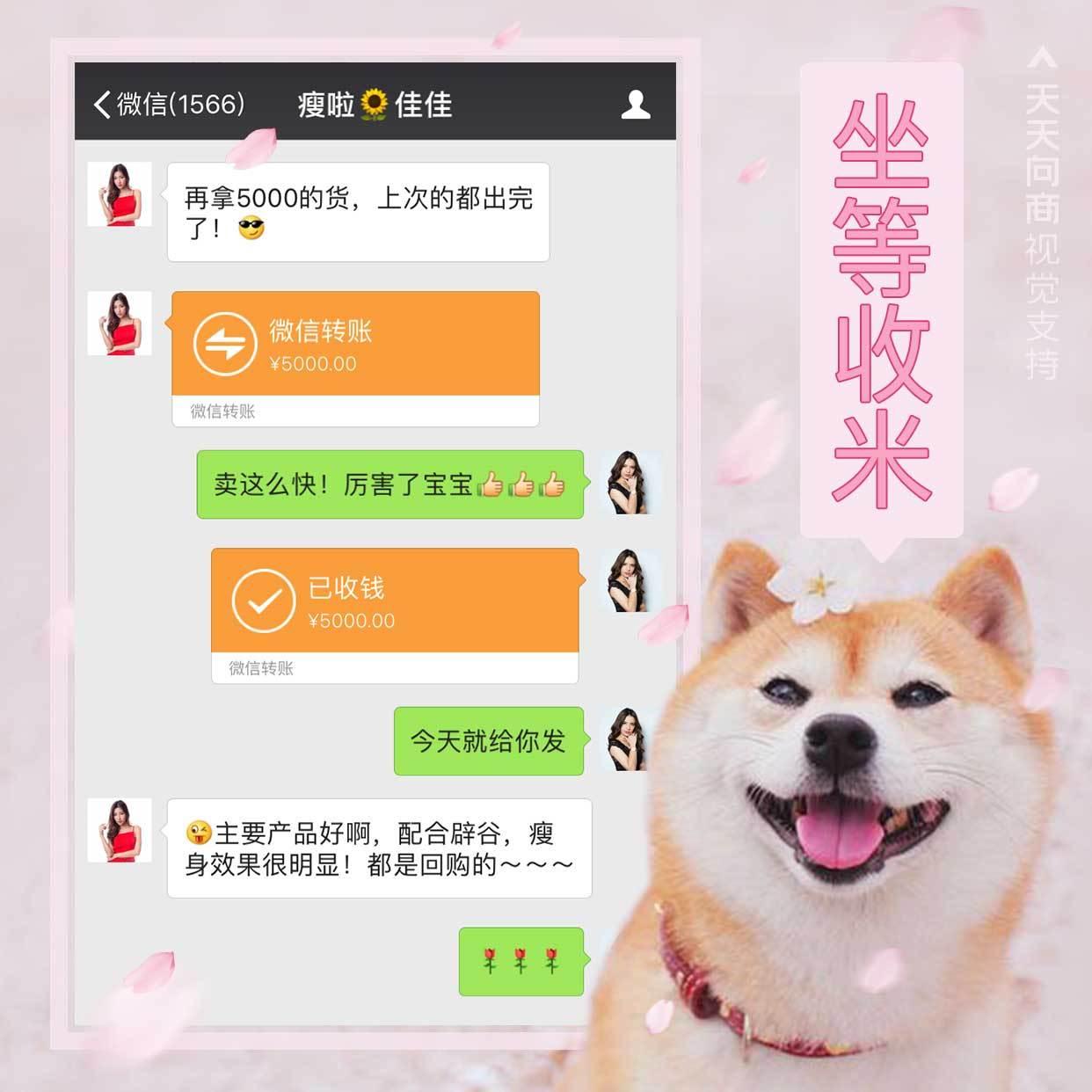 萌宠柴犬花式晒单方形海报