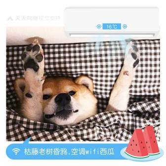 柴狗表情包享受人生