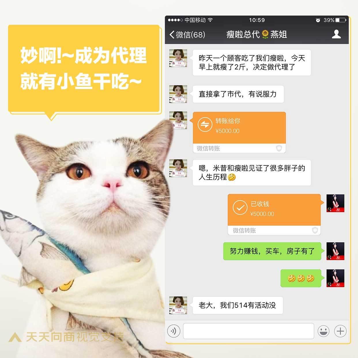 萌宠鱼干猫咪晒单方形海报