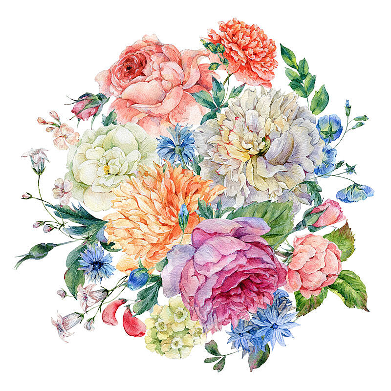 牡丹,玫瑰,野花,水彩画,维多利亚女王时代风格,情人节卡,水彩画颜料,植物学,古典式,储蓄