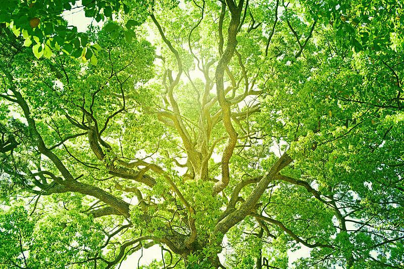 绿色,清新,自然界的状态,环境保护,地球女神,枝,禅宗,森林,向上看,地形