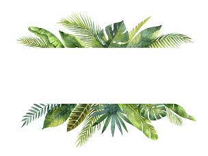 叶子,枝,水彩画,分离着色,白色背景,鸡尾酒,热带气候,棕榈树,手掌