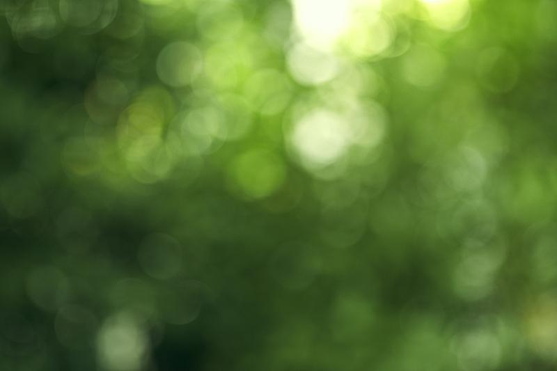 背景,秋天,背景虚化,前景聚焦,环境保护,绿色,散焦,美,艺术,水平画幅