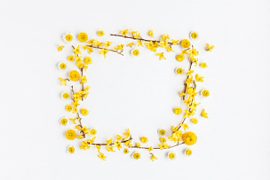 黄色,边框,白色背景,多样,雏菊,花蕾,枝,国际妇女节,花环,甘菊