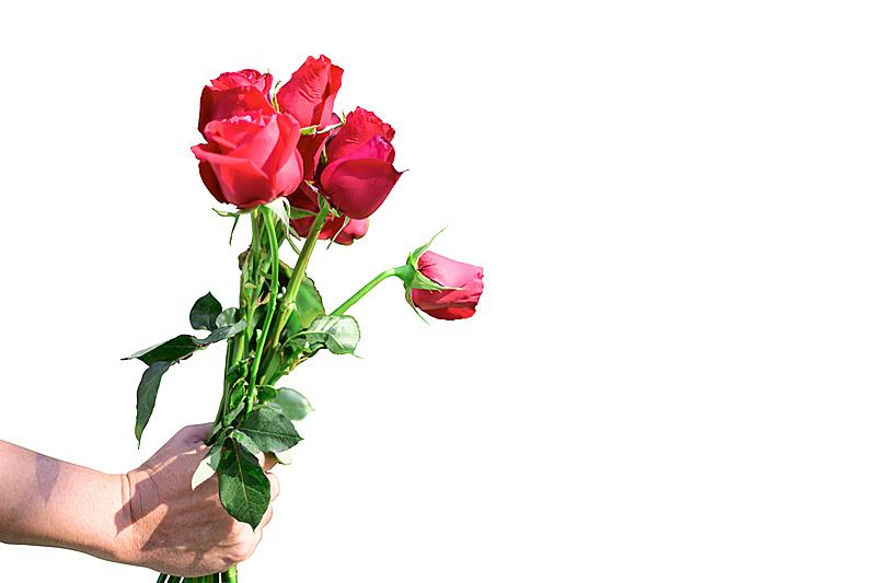 红色,背景分离,玫瑰,情人节卡,背景,分离着色,人的头部,夏天,一个物体,白色