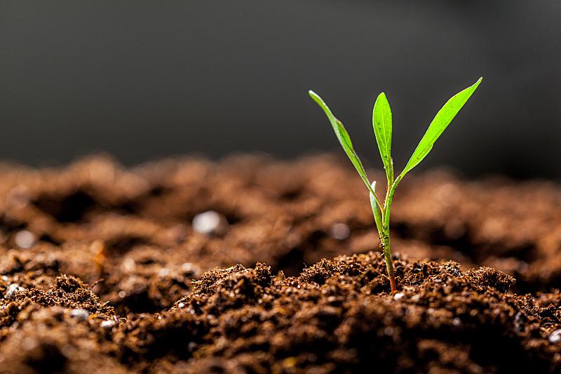 儿童,绿色,秧苗,新的,水平画幅,枝繁叶茂,能源,泥土,户外,农作物