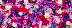 围墙,背景,玫瑰,多色的,纹理效果,郁金香,夏天,生日,仅一朵花,花束