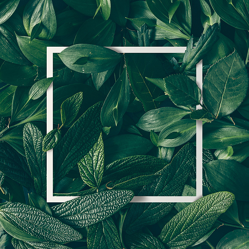 叶子,自然,音符,概念,卡片,仅一朵花,计划书,平铺,创造力,做