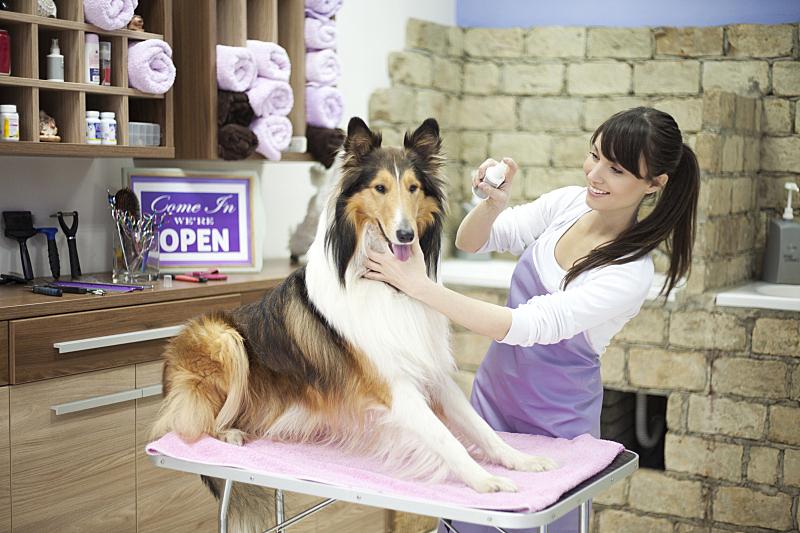 宠物美容师,狗,宠物美容店,动物刷,柯利牧羊犬,业主,水平画幅,白人,动物主题,青年人