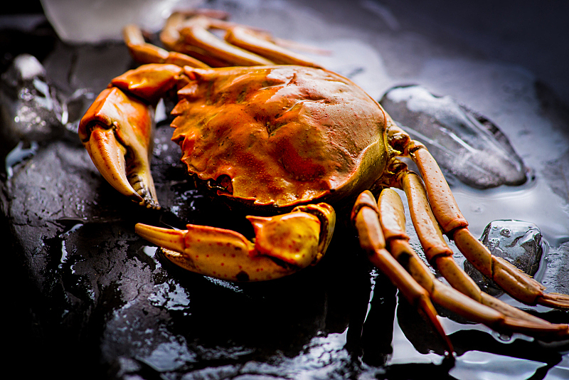 煮食,螃蟹,冰,特写,寒冷,红色,金属,海产,地中海美食,食品