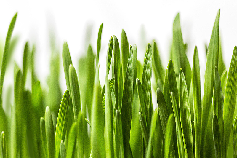 草,白色,刀刃草,环境保护,绿色,草皮,清新,复活节,一个物体,特写