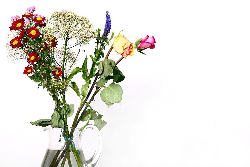花束,自然,水平画幅,无人,白色背景,玫瑰,背景分离,仅一朵花,自然美,红色