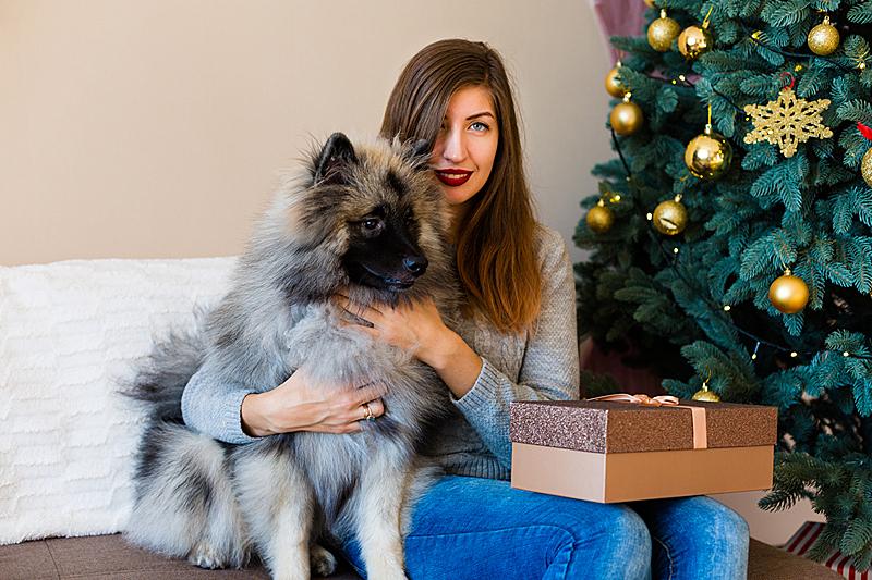 狗,圣诞树,女人,球,盒子,凯斯犬,仅成年人,居住区,沙发,青年人