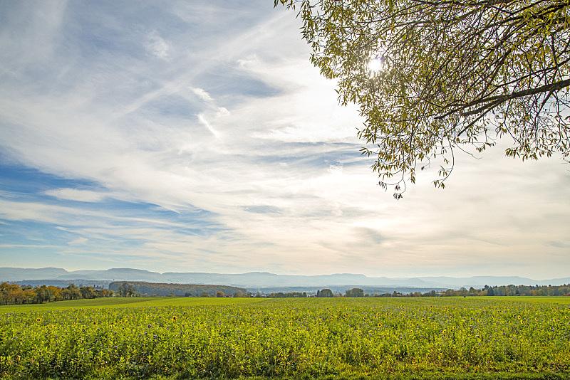 蜜蜂,牧场,自然,草地,水平画幅,山,无人,全景,户外,摄影