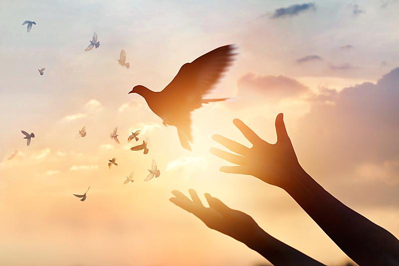 自由,鸟类,自然,女人,概念,背景聚焦,希望,祈祷,日落,享乐