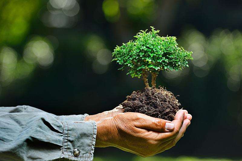植物,小的,盆景,环境保护,抱着树,绿色,环保人士,留白,新的,水平画幅