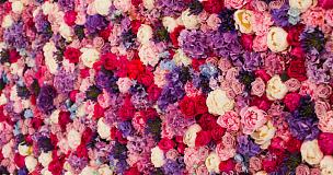 墙,玫瑰,多色的,水平画幅,无人,紫色,2015年,粉色,做,摄影