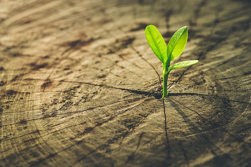 商务,概念,新生活,秧苗,未来,新的,能源,古老的,附生植物,青年人