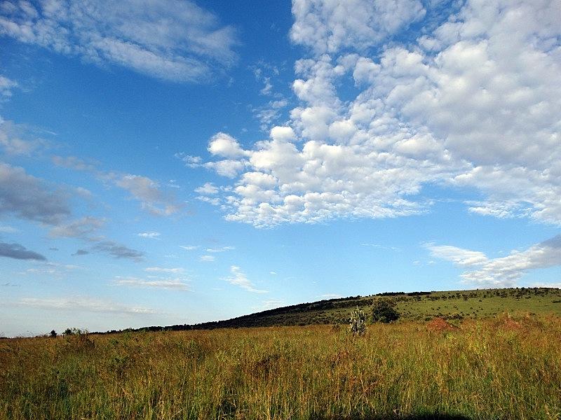 马赛马拉国家保护区,布契尔斑马,非洲大羚,斑马,水平画幅,云,地形,无人,原野,户外