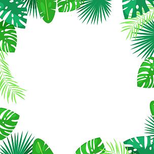 边框,绘画插图,夏天,方形画幅,矢量,鸡尾酒,热带雨林,卡通,白色背景,布置