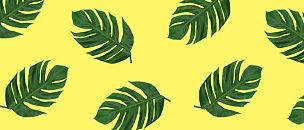 式样,棕榈叶,背景,鸡尾酒,自然,水平画幅,绿色,枝繁叶茂,无人,全景