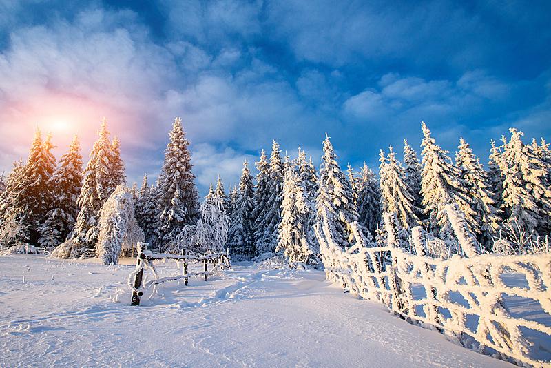 霜,冬天,地形,气候,寒冷,环境,雪,天气,自然美,杉树