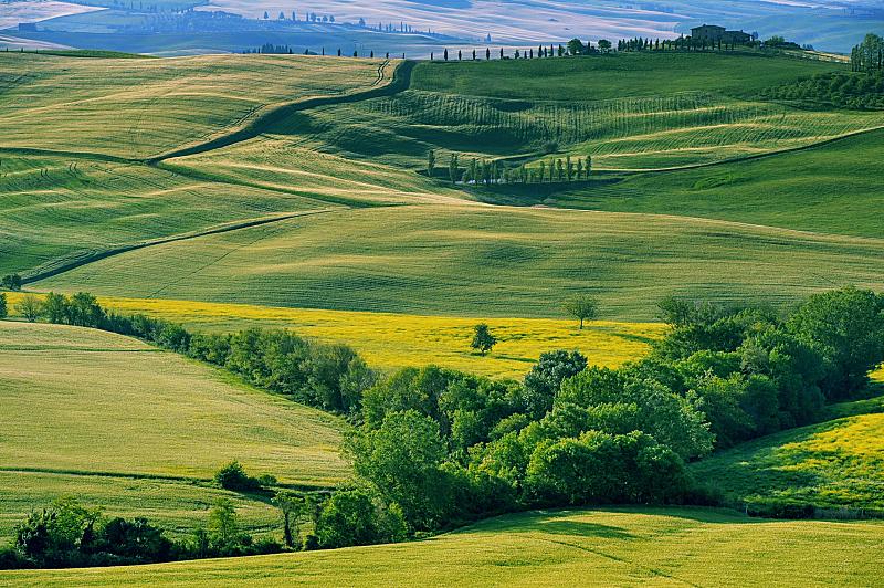 托斯卡纳区,意大利,柏树,天空,水平画幅,山,无人,户外,草,田地