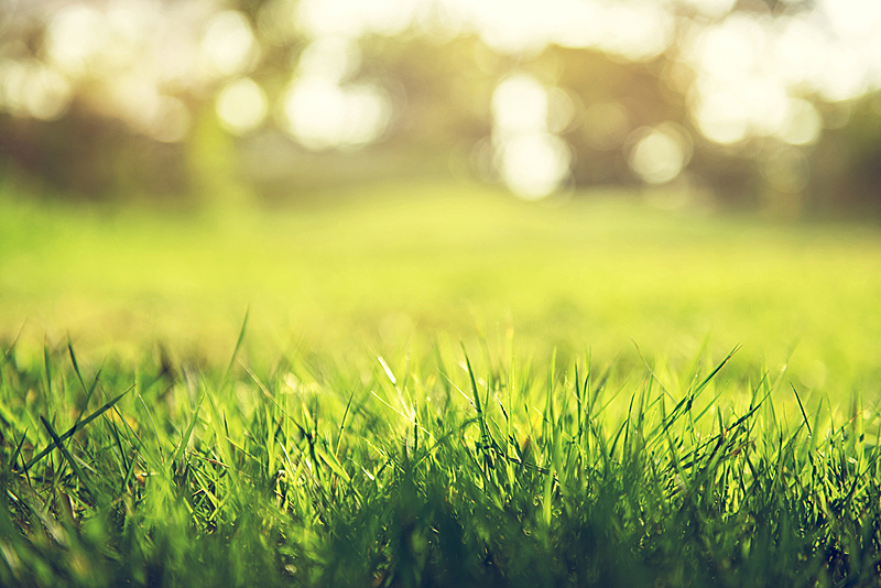 春天,自然,背景,概念,草坪,草地,庭院,草,枝繁叶茂,田地
