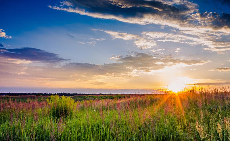 草地,草,自然,春天,水平画幅,无人,夏天,户外,孙继海,太阳
