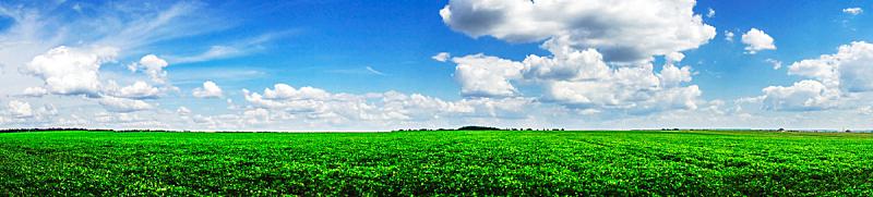 大豆,全景,植物群,尼斯,天空,水平画幅,无人,户外,田地,植物