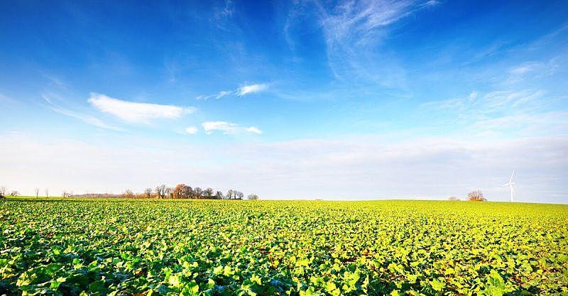 农业,农作物,背景,田地,风轮机,可再生能源,风,电源,环境,云