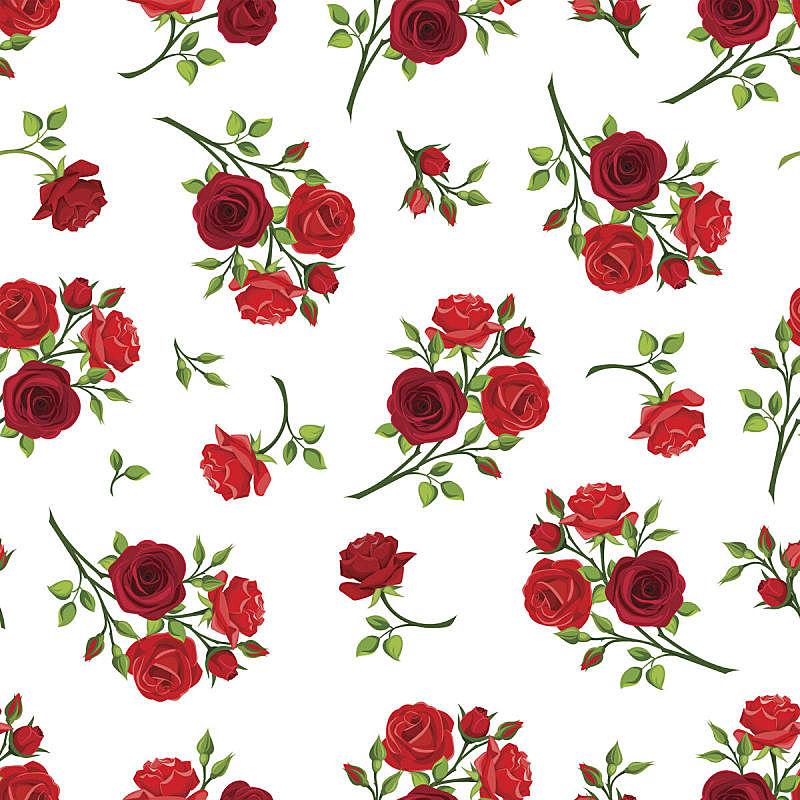 玫瑰,红色,绘画插图,四方连续纹样,矢量,枝,式样,无人,白色背景,方形画幅