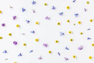 边框,白色背景,多色的,多样,国际妇女节,风信子,母亲节,甘菊,留白,复活节
