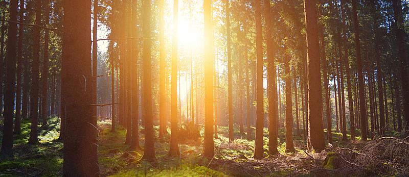 阳光光束,自然美,安静,森林,泉,色彩鲜艳,野生动物跟踪标签,黑森林,林务官,树桩