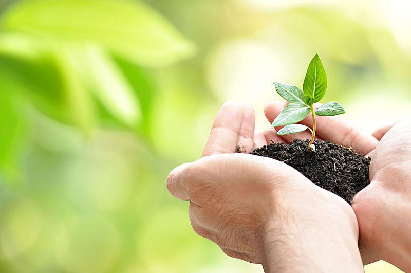 秧苗,手,泥土,绿色,拿着,背景虚化,树苗,花蕾,遮护的手势,环境保护