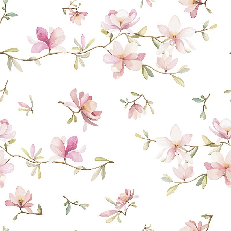 花纹,矢量,非洲堇,玫瑰色的,水彩颜料,水彩画颜料,四方连续纹样,背景,堇菜属 ,白色背景
