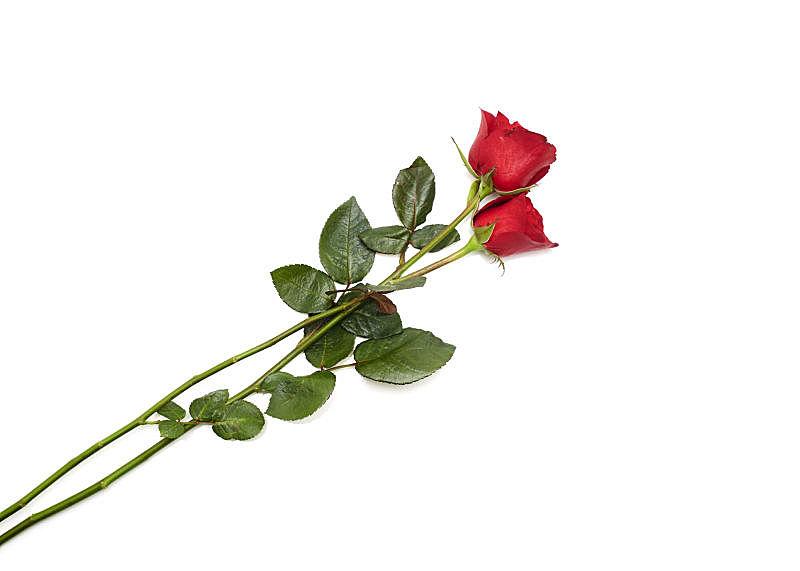 玫瑰,婚姻,红色,白色背景,两个物体,周年纪念,贺卡,空的,清新,背景分离