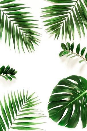 白色背景,式样,绿色,边框,枝,鸡尾酒,风景,抽象,棕榈树,上装