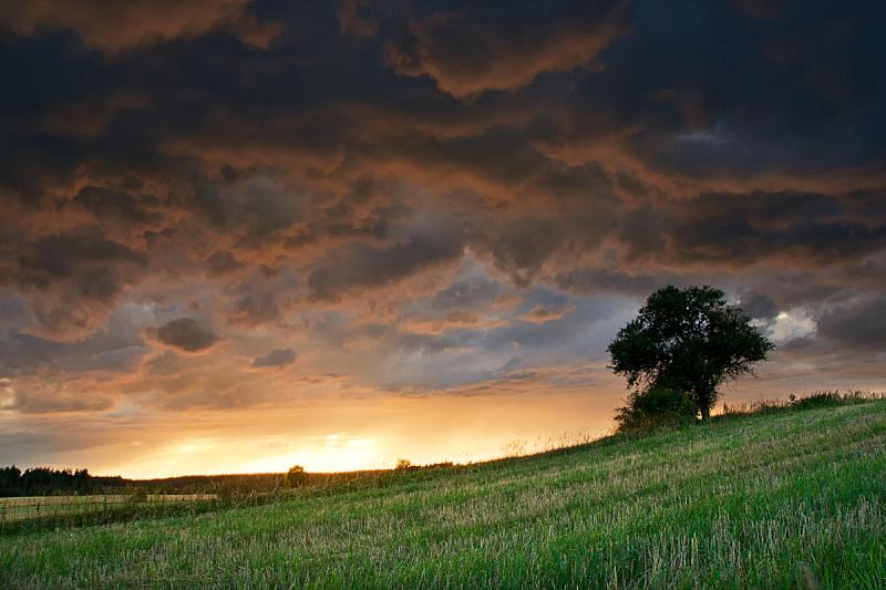 燕麦,地形,田地,乌云,在上面,天空,美,水平画幅,夏天,阴影