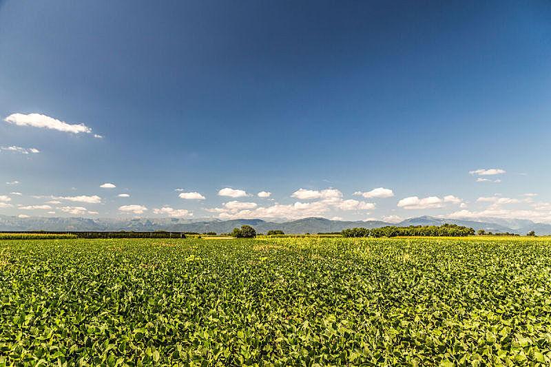 绿色,田地,意大利,天空,雪,夏天,草,白色,沥青,条纹
