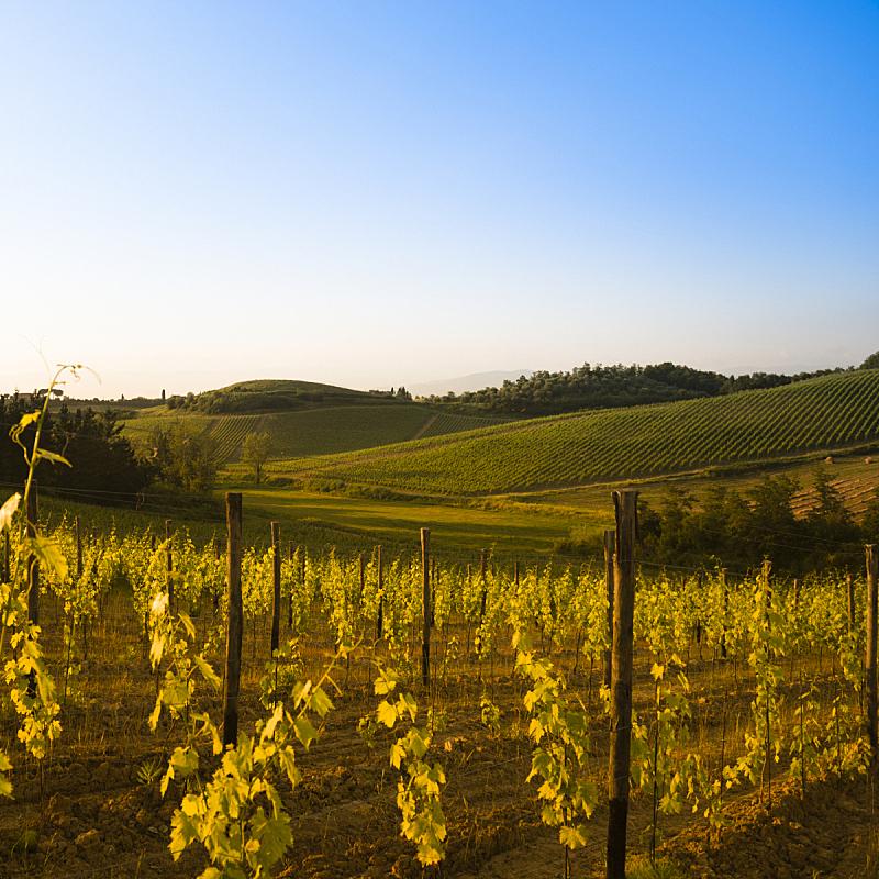 奇扬第地区,托斯卡纳区,意大利,山,蒙塔西诺,无人,巨大的,户外,云景,植物