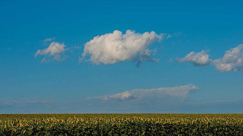 云,田地,花朵,向日葵,八月,天空,美,水平画幅,无人,夏天