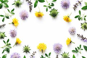 草地,白色背景,边框,花头,三叶草,花瓣,鲜花盛开,花纹,纯净,花