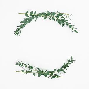 边框,平铺,白色背景,枝,桉树,风景,艺术,夏天,白色,植物