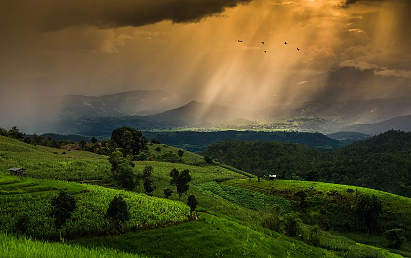 稻,泰国,天空,美,水平画幅,早晨,户外,草,植物,黎明