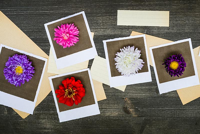 古典式,褐色,水平画幅,剪贴本,无人,抽象,雏菊,摄影