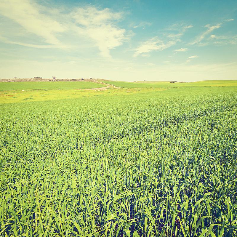 田地,以色列,天空,灵性,山,古典式,泥土,夏天,户外,草