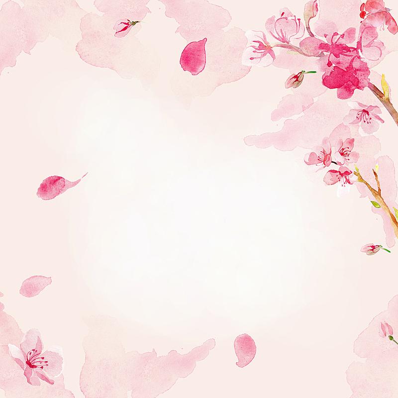 仅一朵花,背景,水彩画,樱之花,樱花,柔和色,柔和,粉色,水彩颜料,花朵